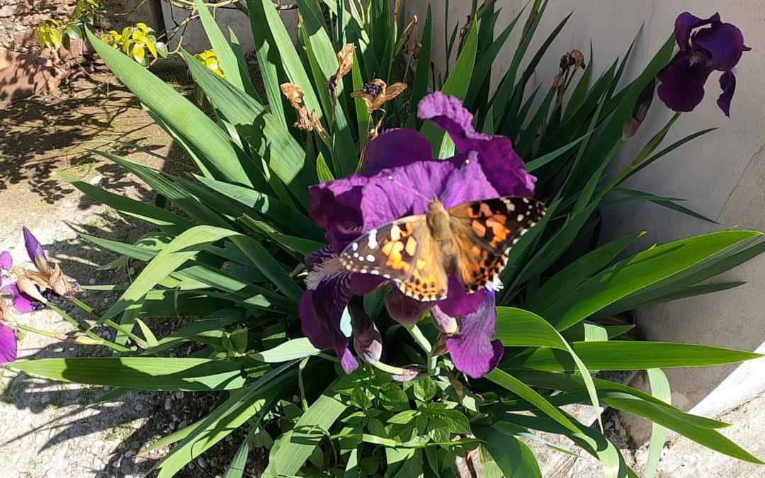 Des papillons en classe !